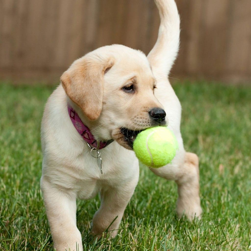 Pet Store Beautiful Dogs 30 Second Commercial Script Commercials By The Dozen